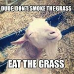 Animal Memes - eat the grass