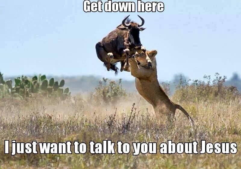 Animal Memes - get down here