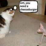 Animal Memes - girl you need a cheeseburger