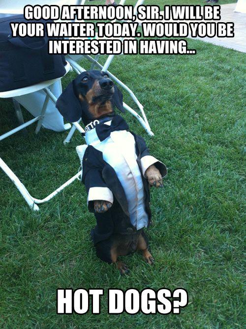 Animal Memes - good afternoon sir