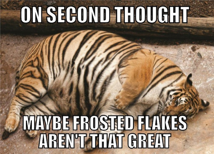 Funny Animal Memes - on second thought