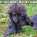 Funny Animals Memes - my face when i miss my alarm