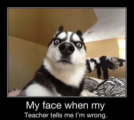 Funny Animals Memes - my face when