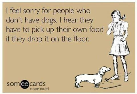 Funny Ecards - i feel sorry for people