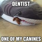 Funny Memes - i need to see a dentist