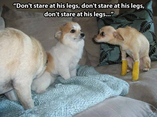 Animal Memes - dont stare