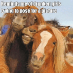 Animal Memes - drunk girls