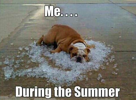 Animal Memes - during the summer