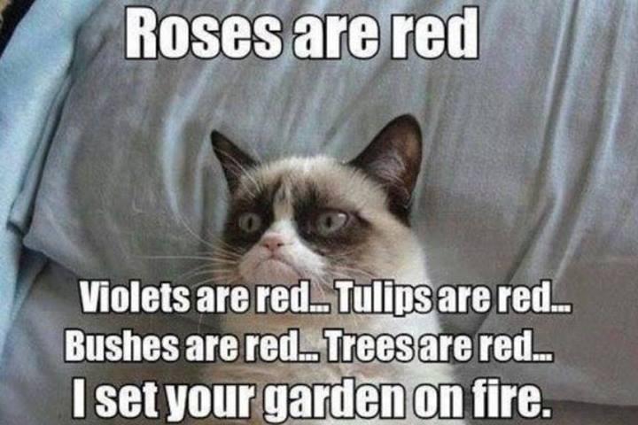 Animal Memes - grumpy cat roses