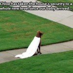 Animal Memes - guard dog