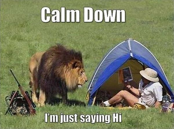 Animals Memes: calm down