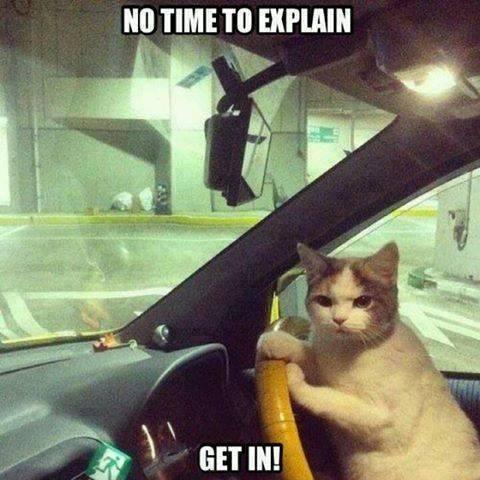 Funny Animal Memes - no time to explain