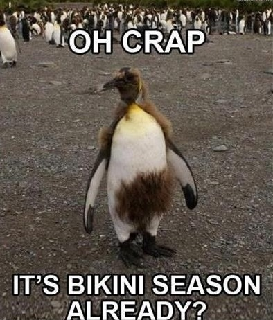 Funny Animal Memes - oh crap