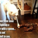 Funny Animal Memes - once you have seen