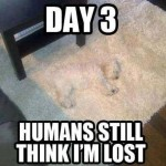 Funny Animal Memes - still think im lost