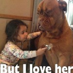 Funny Animal Memes - yes shes annoying
