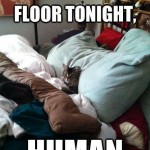 Funny Animal Memes - you sleep on floor