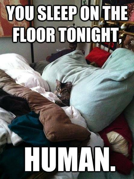 Funny Animal Memes - you sleep on floor