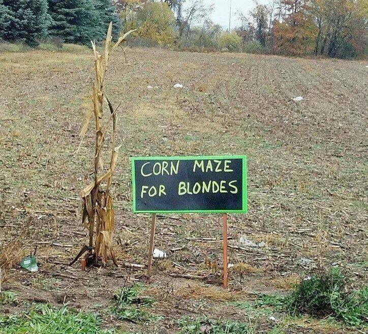 Funny Memes - corn maze for blondes