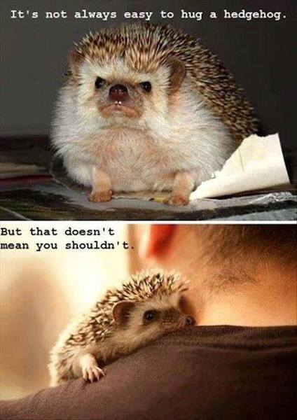 Animal Memes - hug a hedgehog
