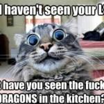 Animal Memes - i havent seen