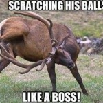 Funny Animal Memes - like a boss