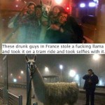 Funny Animal Memes - selfies with a llama