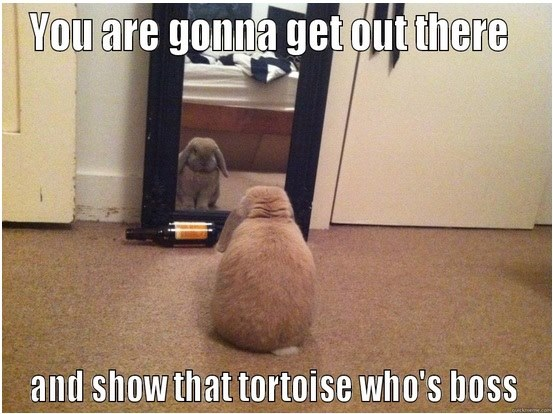 Funny Animal Memes - show that tortoise