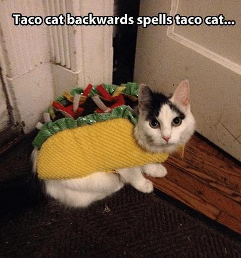 Funny Animal Memes - taco cat