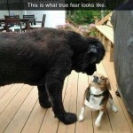 Funny Animal Memes - true fear