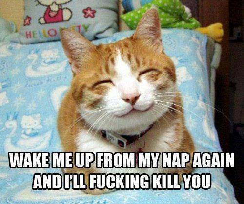 Funny Animal Memes - wake me up again