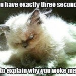 Funny Animal Memes - why did you wake me