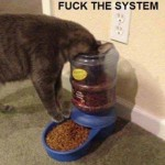 Animal Memes - fuck the system