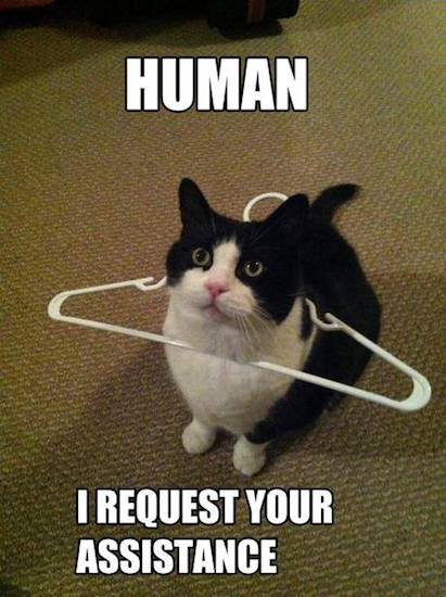 Animal Memes - i need assistance