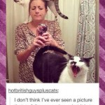 Animal Memes: being a cat owner