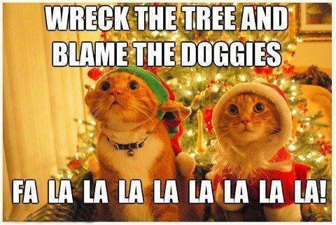 Animal Memes: blame the doggies