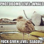 Funny Animal Memes - photobomb level