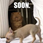 Funny Animal Memes - soon enough