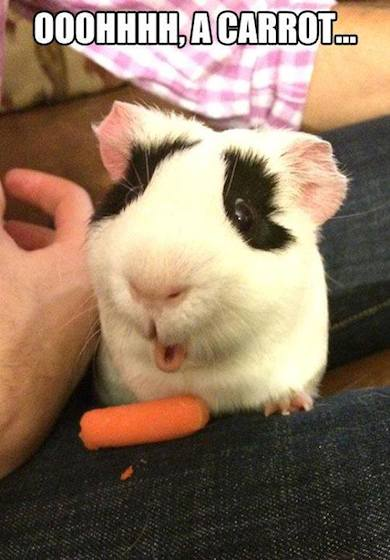 Funny Animals Memes - is that a carrot