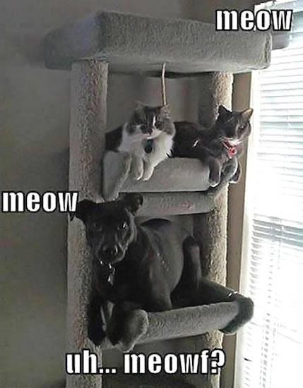 Funny Animals Memes - meow meow