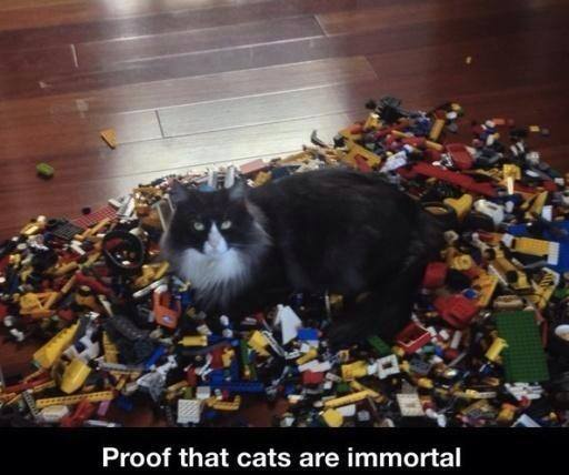 Funny Memes: cats are immortal