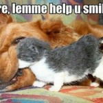Animal Memes - help you smile