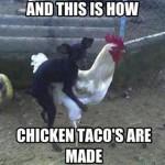Chicken Memes: chicken tacos