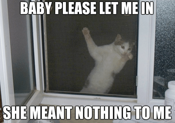 Funny Animal Memes - let me in