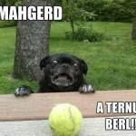 Funny Animal Memes - ternus berl
