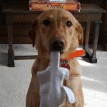 Funny Animal Memes - took his bone