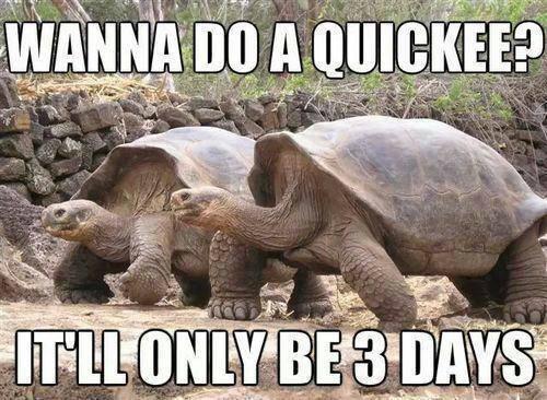 Funny Animal Memes - wanna do a quickee