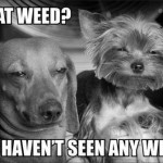 Funny Animal Memes - what weed