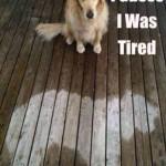 Funny Animals Memes - i was tired