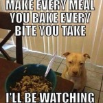 Funny Animals Memes - ill be watching
